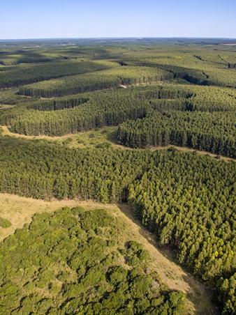 Informe público de Gestión Forestal 2017