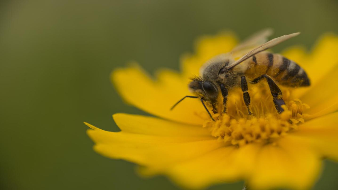 Producción de miel orgánica aumenta en predios de Montes del Plata.