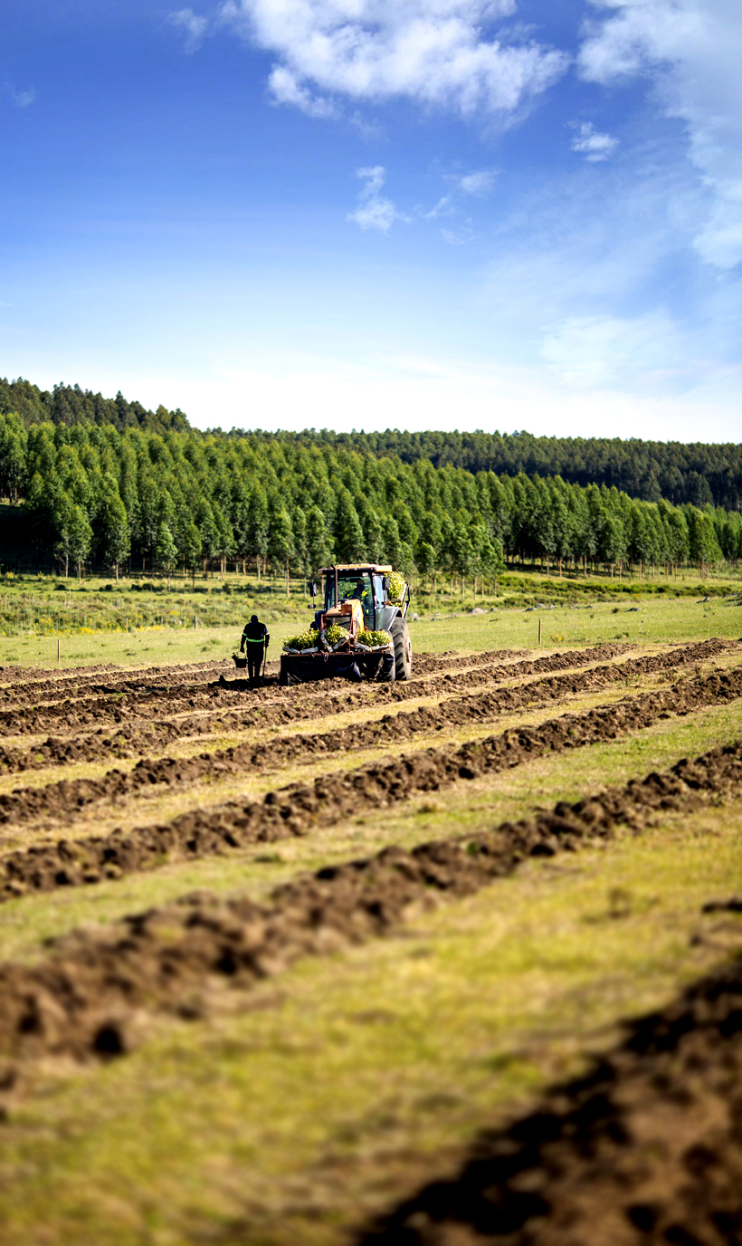 From planting to harvesting